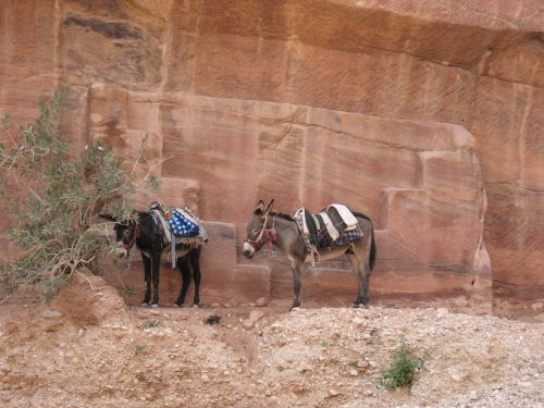 The ubiquitous donkeys.